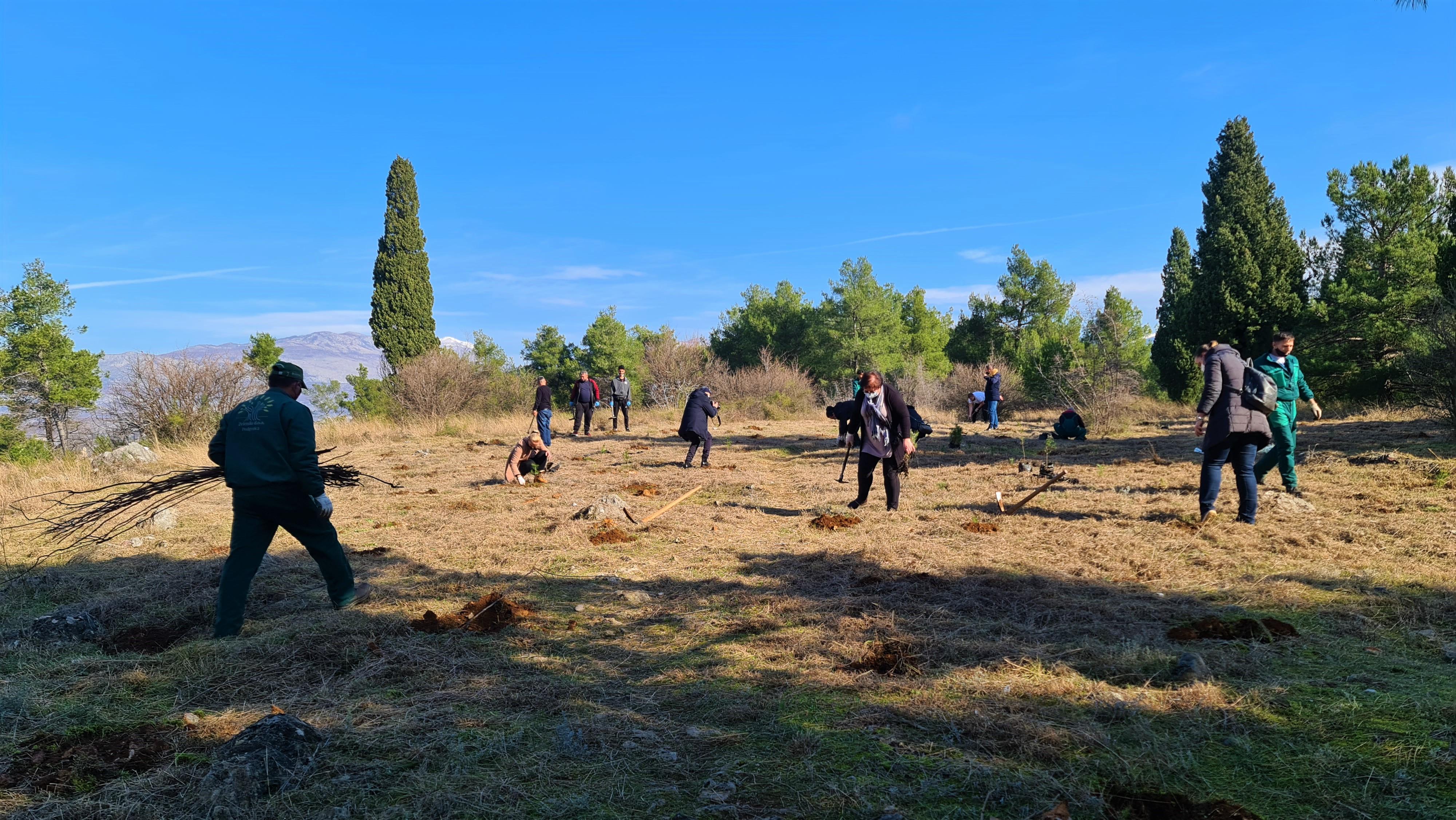 Glavni grad organizuje masovnu akciju pošumljavanja Gorice